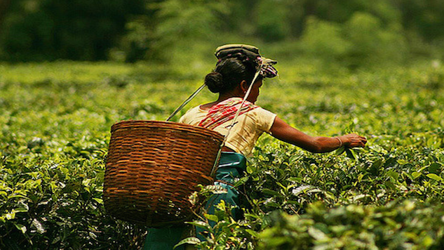 The Future of India's Tea Looks Good