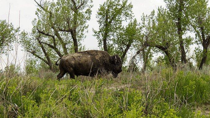 The 5 Best National Parks for Spotting Wildlife