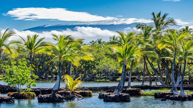Checklist: Western Big Island, Hawaii