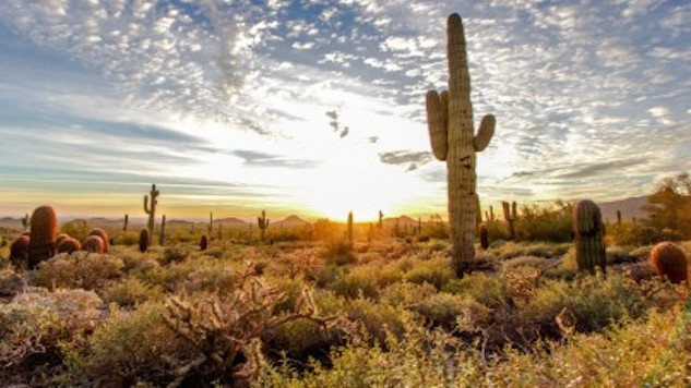 Off The Grid: 5 Reasons to Visit Phoenix's Sunny Wilderness