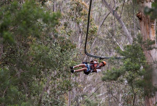 treetop-crazy-rider.jpg