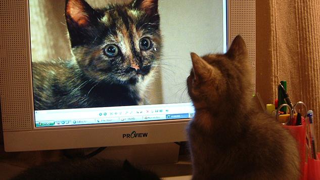 <i>Make America Kittens Again</i> With Chrome Plugin