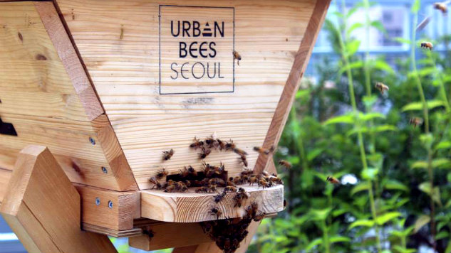 Urban Bees Seoul Lures More Believers With Honey
