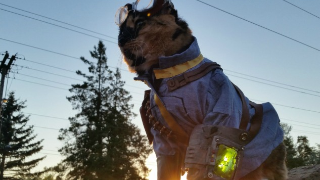 Cat Cosplay Will Brighten Your Day With Twelve Cosplay-Wearing Cats