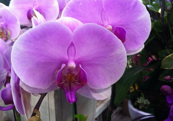 yangjae-flower-market-alexey-matveichev.jpg