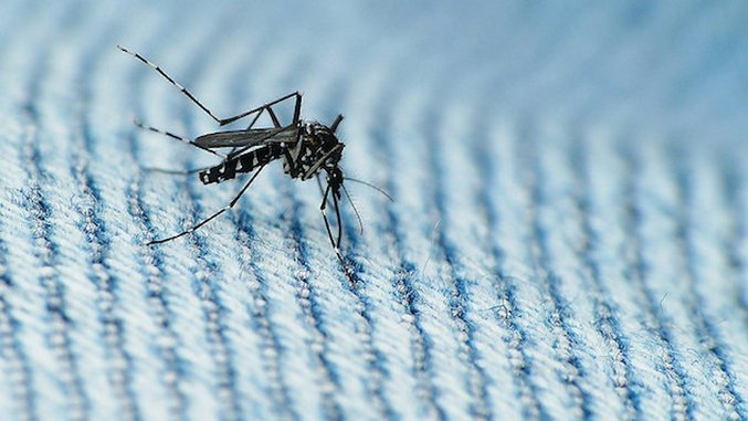 Zika Arrived in Florida Earlier-and More Often-than Previously Thought