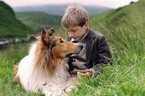 lassie.jpeg