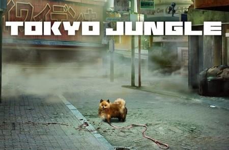tokyo jungle pomeranian.jpg
