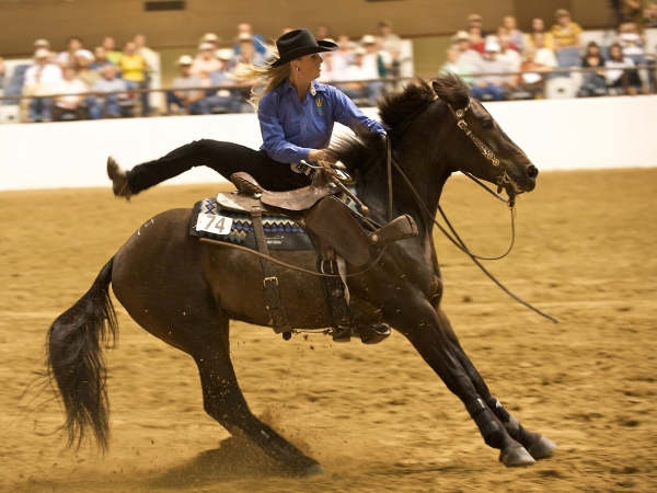 <i>Wild Horse, Wild Ride</i>
