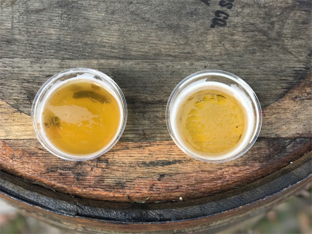 adult-festival beer-samples