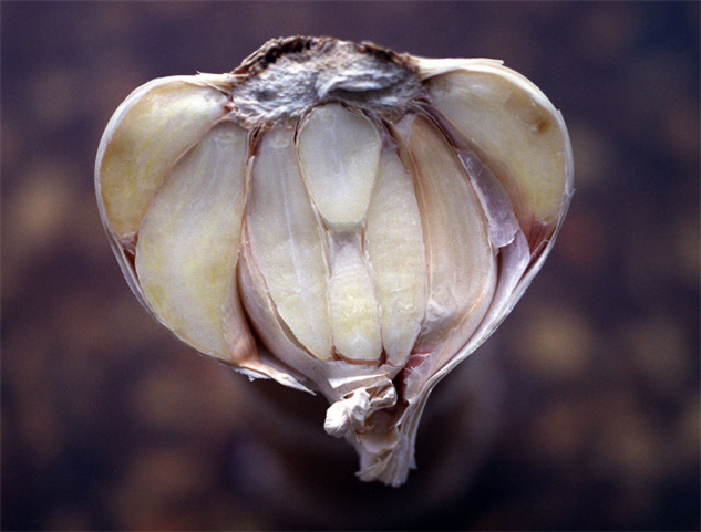april-food-holidays 12-garlic