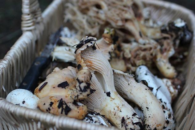 april-food-holidays 7-mushroom