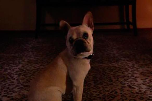best-tv-dogs cat-stevens---californication