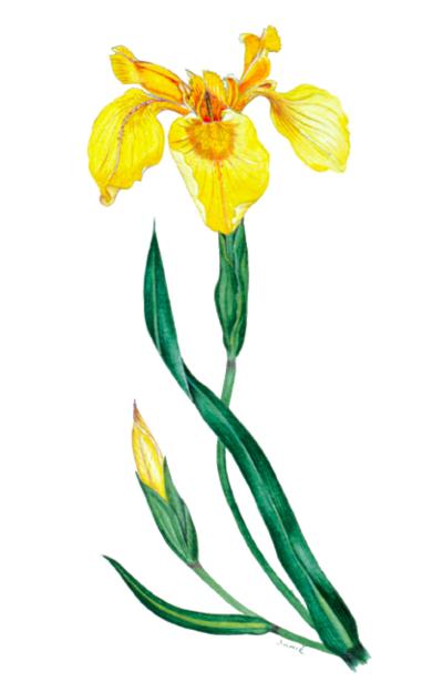 botanical-shakespeare 1bsflags