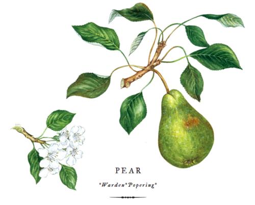 botanical-shakespeare 1bspear