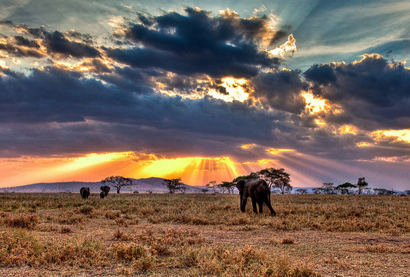 bucket-list serengeti-tanzania-bl-paste