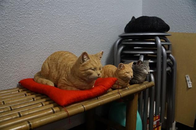 cat-restaurant ncats-15