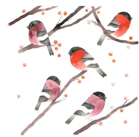 charm-of-goldfinches 1charmbullfinch