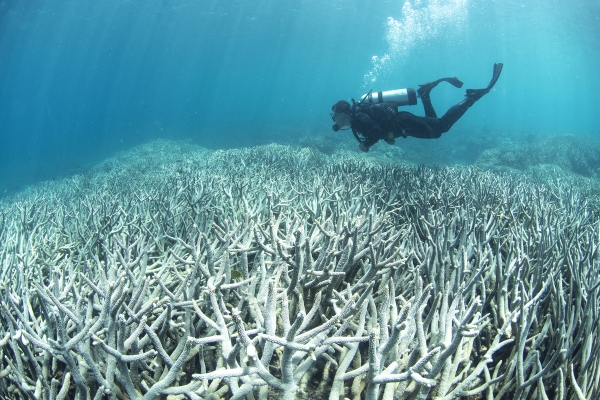 climate-change coral-bleaching