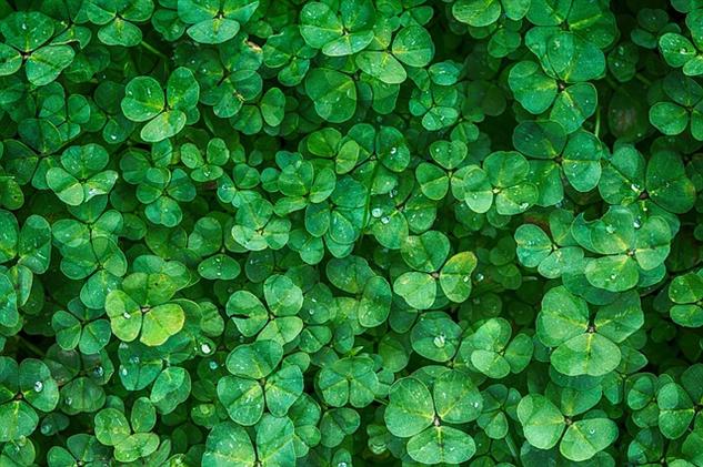 color-psychology green
