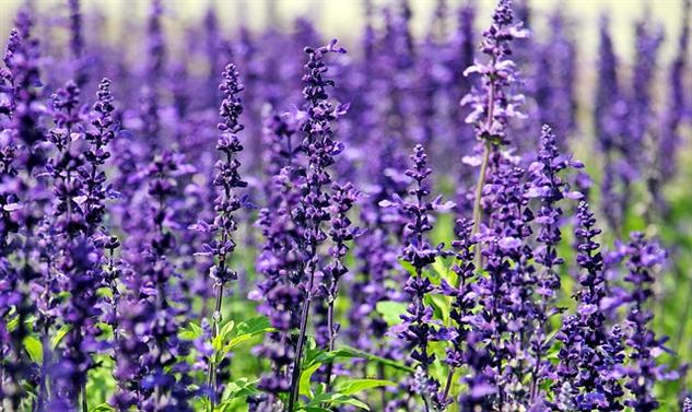 color-psychology purple