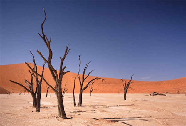 cool-forests deadvlei-new