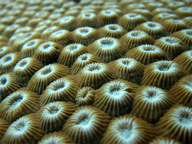 coral-health coral6