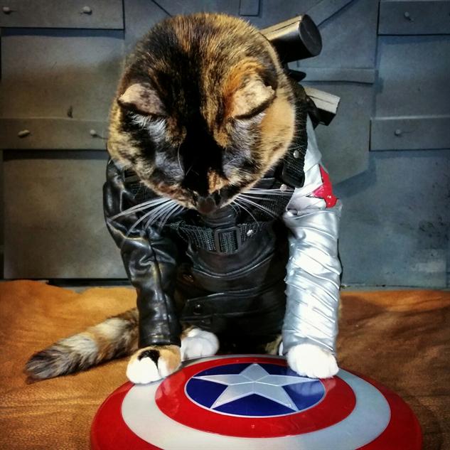 cosplay-cat bucky-barnes