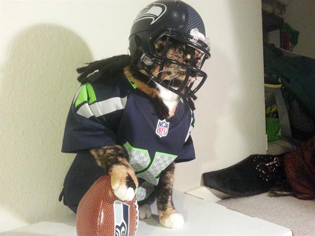 cosplay-cat football-cat