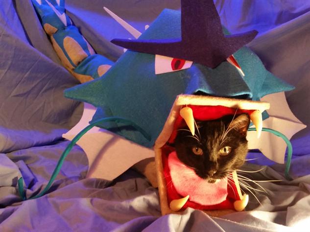 cosplay-cat gyarados