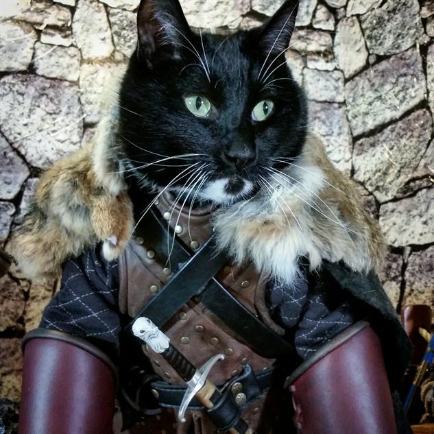 cosplay-cat jon-snow