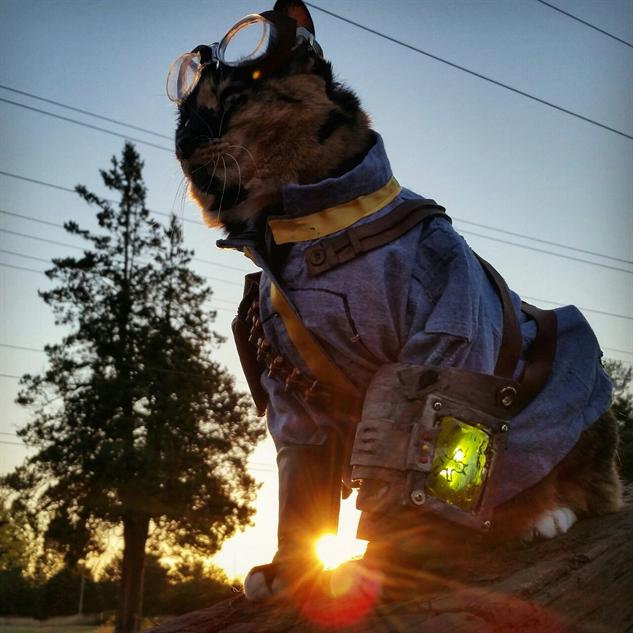 cosplay-cat vault-cat