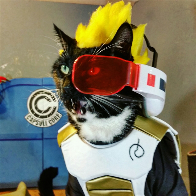 cosplay-cat vegeta--purrince-of-the-saiyans