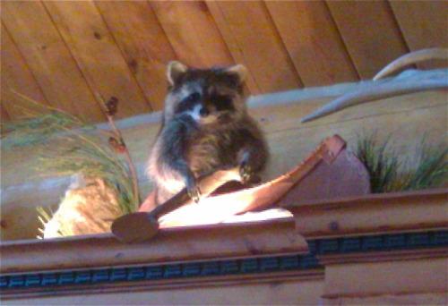 crap-at-my-parents-house photo_27595_0-7