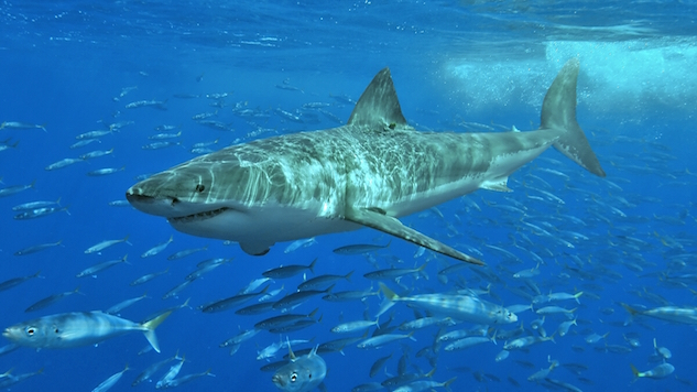dangerous-animals great-white-shark