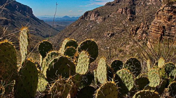 desert-getaways tucson-sabino-canyon-arizona-paste-bl