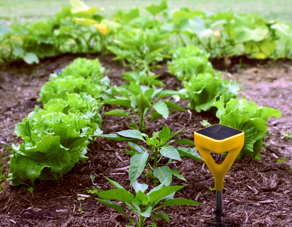 design-gardens edyn-sensor