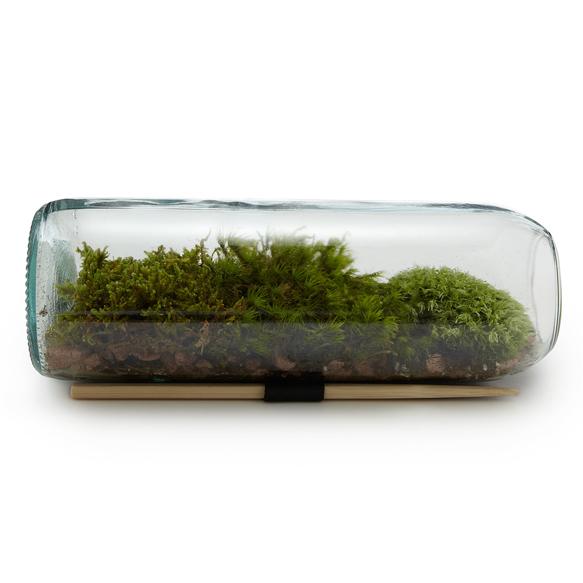 design-gardens terrarium-bottle-uncommon-goods
