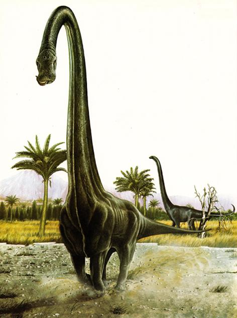 dinosaur-paleoart cox-barosaurus