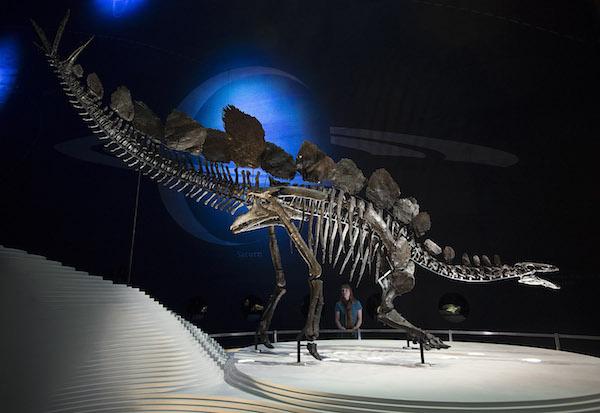 dinosaur-paleoart modern-stegosaurus-skeleton