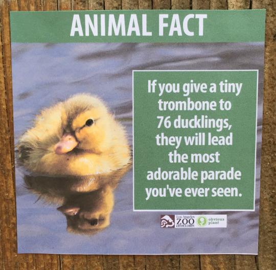 fake-animal-facts animal-facts-2