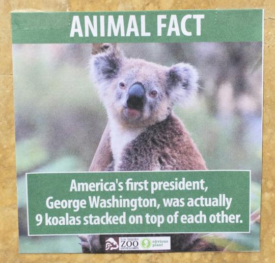 fake-animal-facts animal-facts-3