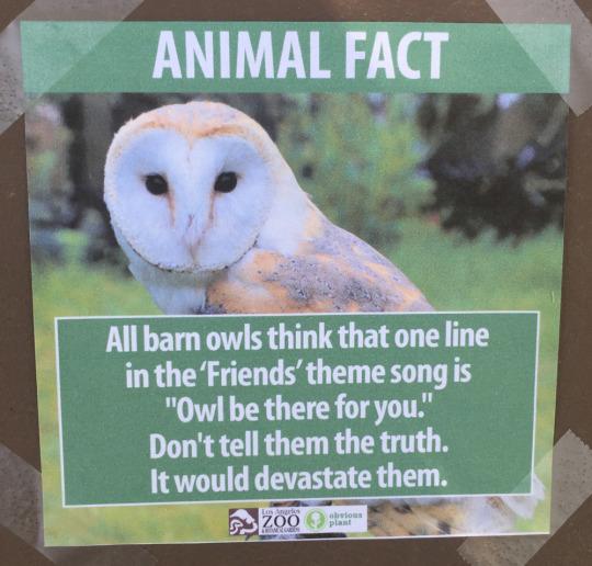 fake-animal-facts animal-facts-4