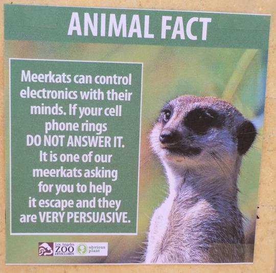 fake-animal-facts animal-facts-5