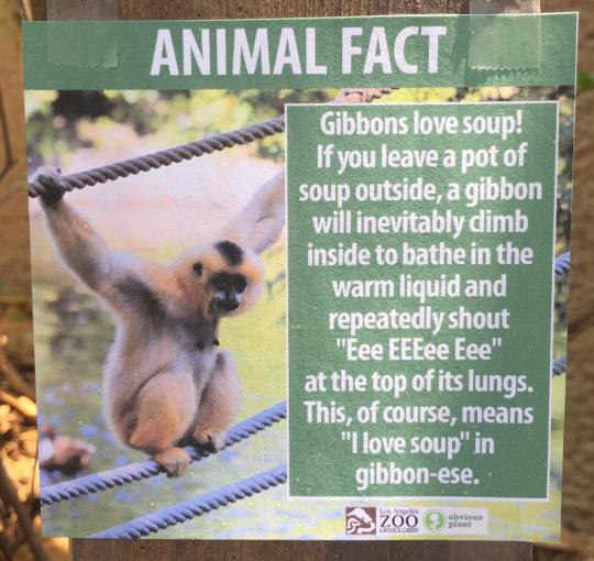 fake-animal-facts animal-facts-6