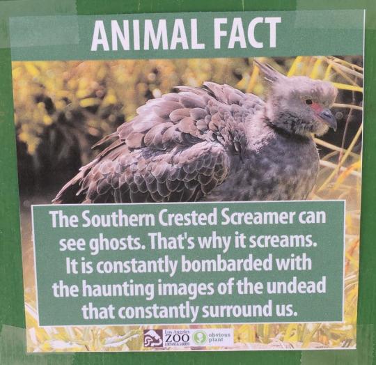 fake-animal-facts animal-facts-7