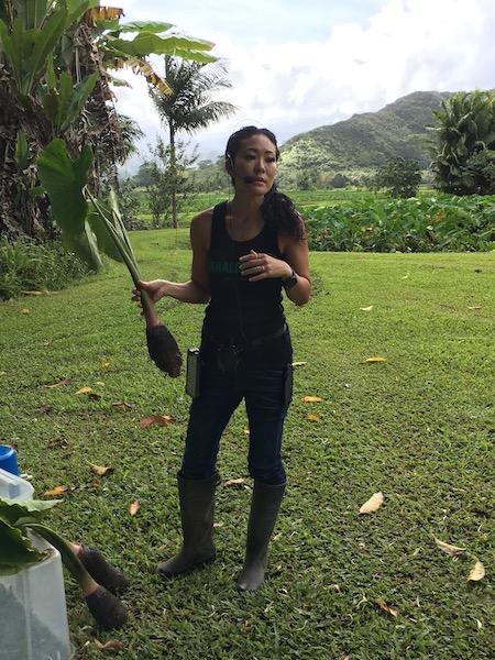 farm-hawaii- 10