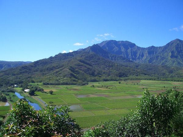 farm-hawaii- 12