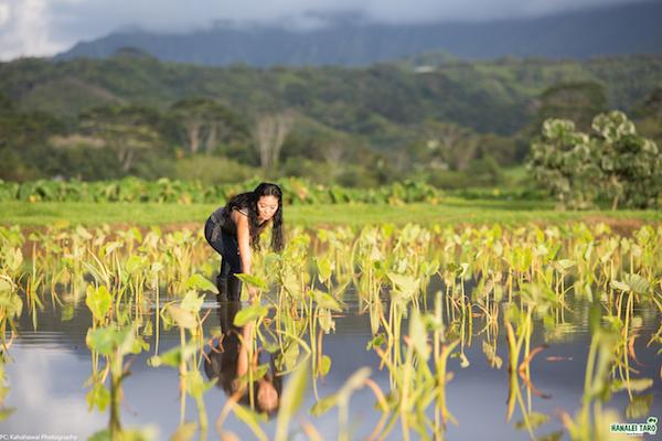 farm-hawaii- 2