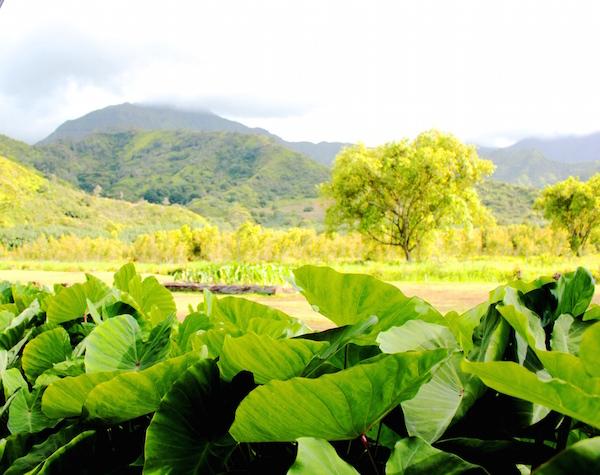 farm-hawaii- 22